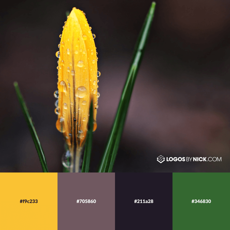 Yellow, purple and green color combination
